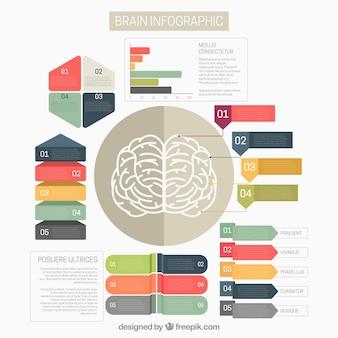 Gehirn-infografik-vorlage mit bunten optionen