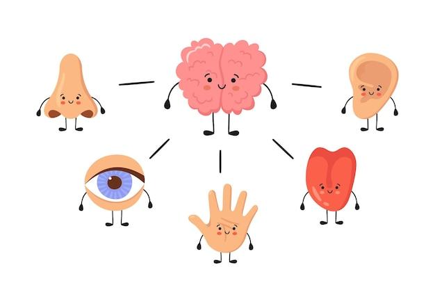 Gehirn und fünf menschliche sinnesorgane kawaii charaktere. nase, ohr, hand, zunge und auge. süße sinnesorgane. sehen, hören, fühlen, riechen und schmecken. vektorillustrationen isoliert auf weißem hintergrund