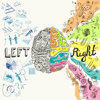 Gehirnhälften skizzieren