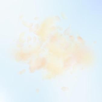 Gelb-orangefarbene blütenblätter, die herunterfallen. wunderbare romantische blumenexplosion. fliegendes blütenblatt auf quadratischem hintergrund des blauen himmels. liebe, romantik-konzept. attraktive hochzeitseinladung.