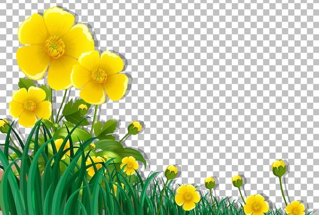 Gelbe blumenfeldrahmenschablone auf transparentem hintergrund