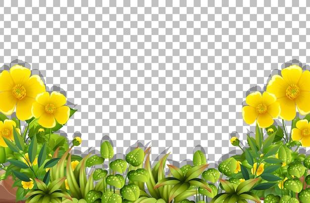 Gelbe blumenrahmenschablone auf transparentem hintergrund