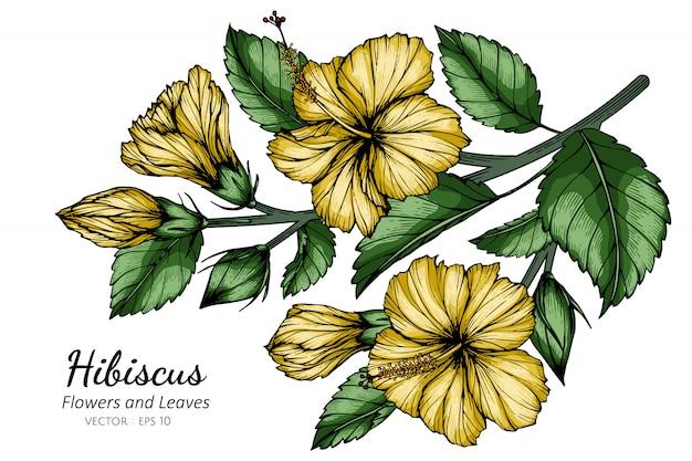 Gelbe hibiskusblumen- und blattzeichnungsillustration mit strichzeichnungen auf weiß.