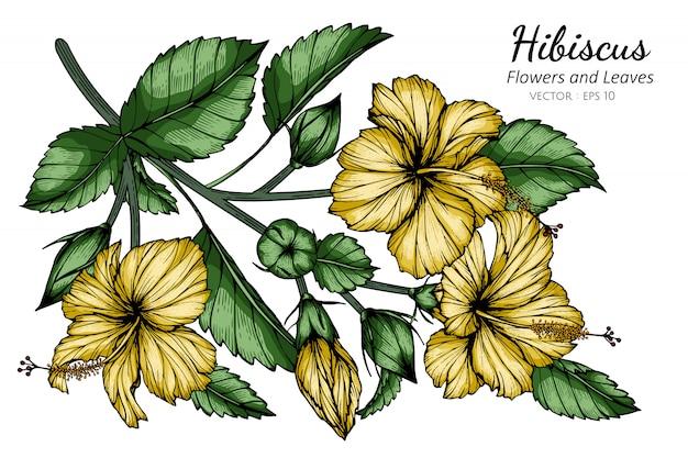 Gelbe hibiskusblumen- und blattzeichnungsillustration mit strichzeichnungen auf weißem hintergrund.