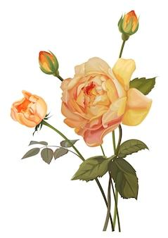 Gelbe rose isolierte vektorillustration