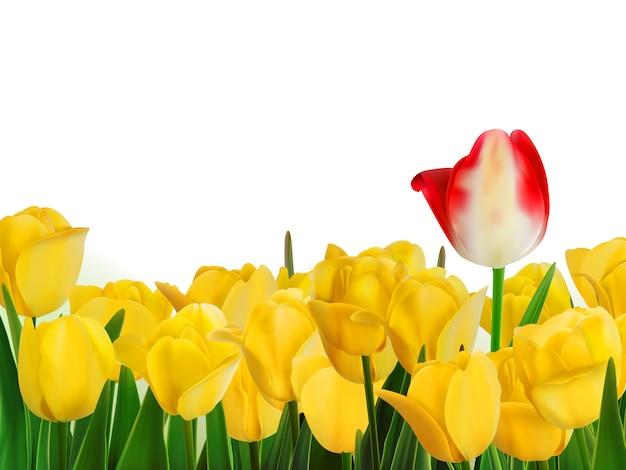 Gelbe tulpen und eine rote.