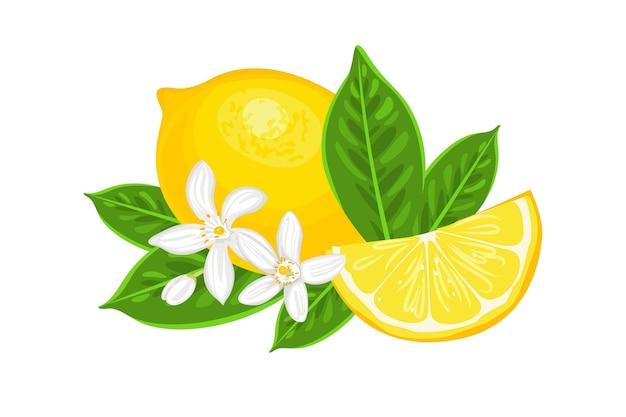Gelbe zitronen-zitrusfrucht mit grünen blättern und weißen blüten.
