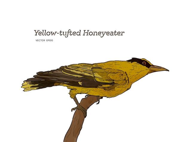 Gelber büscheliger honeyeater gehockt auf holz