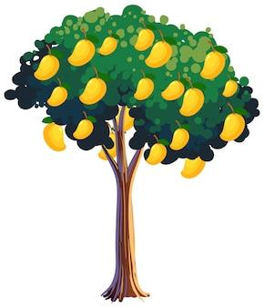 Gelber mangobaum isoliert auf weißem hintergrund