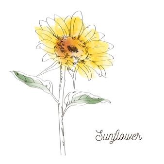 Gelbes sonnenblumenillustrationsdesign auf weißem hintergrund