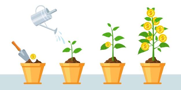 Geldbaum im topf. finanzieren sie gewinnwachstumsinfografik mit phasen von pflanzenwachstumsmünzen. wirtschaftliche geschäftsinvestitionen oder einnahmenvektorkonzept. einkommensstrategie, einkommen steigern und sparen Premium Vektoren