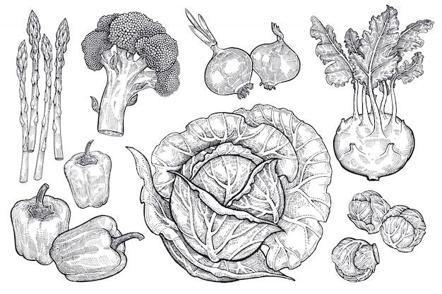 Gemüse eingestellt. vintage grafiken.