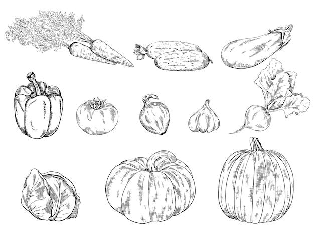 Gemüse handgezeichnete vintage-rahmenillustration ideal für menübanner-label-logo-flyer