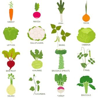 Gemüse-icon-set