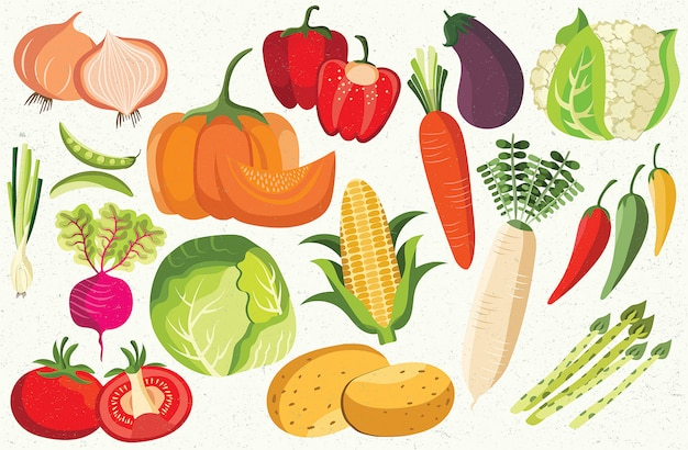 Gemüse zwiebeln bohne rote beete tomate kartoffel mais karotte chili aubergine kohl kürbisse gesunde ikone