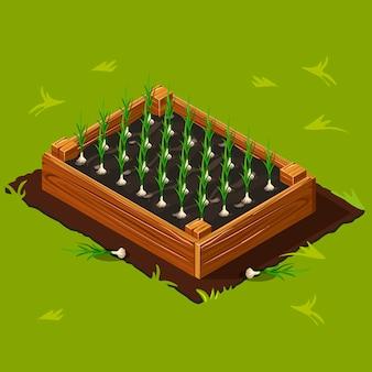 Gemüsegarten box mit knoblauch