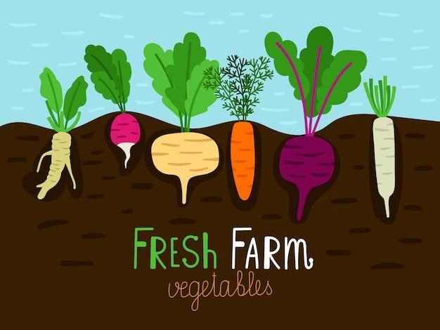 Gemüsegarten, der illustrationskarte wächst