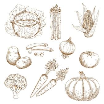 Gemüsemarkt, landwirtschaft, rezeptbuch oder vegetarisches food-design