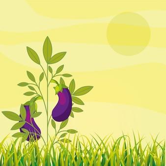 Gemüseplantage für landwirtschaftliche plantagen