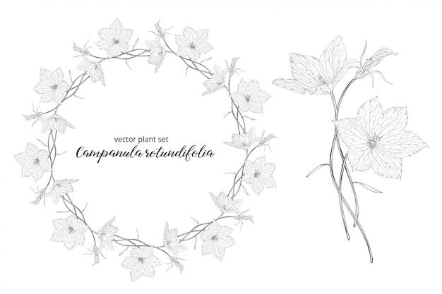 Gemüseset von campanula rotundifolia