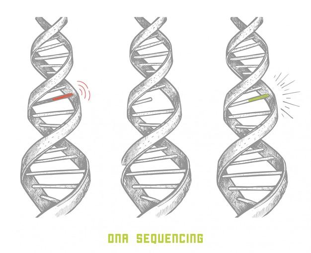 Genomsequenzierung. dna-sequenzierung. hand gezeichnete dna. konzept