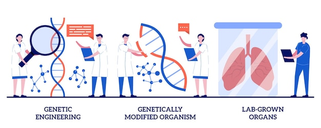 Gentechnik, genetisch veränderter organismus, im labor gezüchtetes organkonzept mit winzigen menschen. bioengineering-set. dna-manipulation, stammzellen, transplantationsmetapher. Premium Vektoren