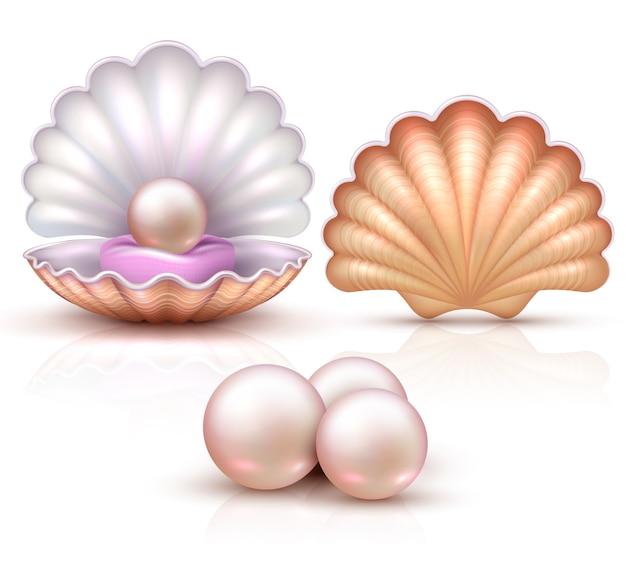 Geöffnete und geschlossene muscheln mit den perlen lokalisiert. schalentiervektorillustration für schönheits- und luxuskonzept. muschel und perle, muschelluxusschatz