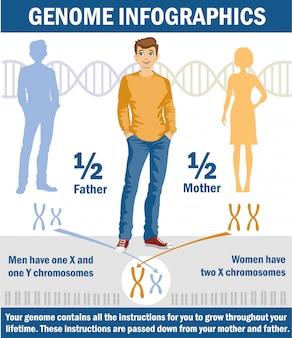 Geschlechtsbestimmung beim menschen. x- und y-chromosom.