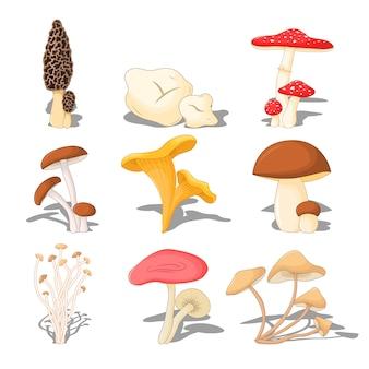 Gesetzte essbare pilze mit dem schatten, dreidimensional auf weißem hintergrund