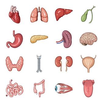 Gesetzte ikone der karikatur des menschlichen organs gesetzte ikone der karikatur des anatomiekörpers lokalisierten. abbildung menschliches organ.