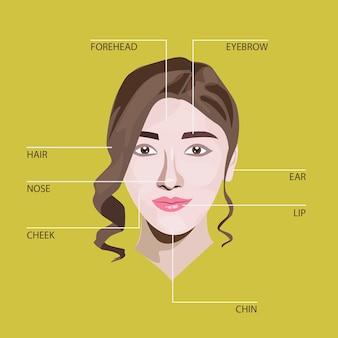 Gesicht anatomie illustration