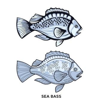 Gestreifte seebarschfischillustration mit optimiertem strich
