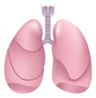 Gesunde menschliche lunge atmungssystem. lunge, kehlkopf und luftröhre eines gesunden menschen