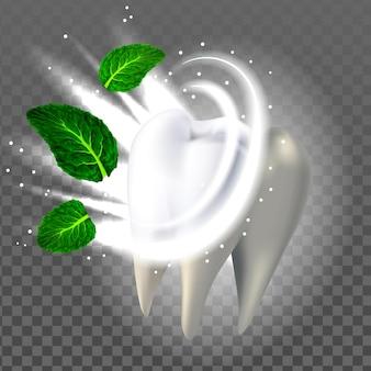 Gesunder zahn und natürlicher aroma-minze-blatt-vektor. weißer zahn mit gesundem zahnschmelz und glanz. aromatischer mundgeruch und gesundheitsschablone realistische 3d-illustration