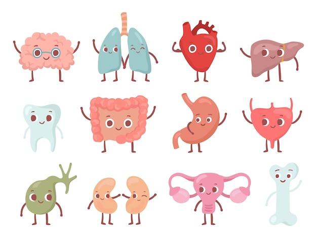Gesundes biologisches organ. lächelnde lunge, glückliches herz und lustiges gehirn. lokalisierter zeichensatz der lächelnorgane karikatur