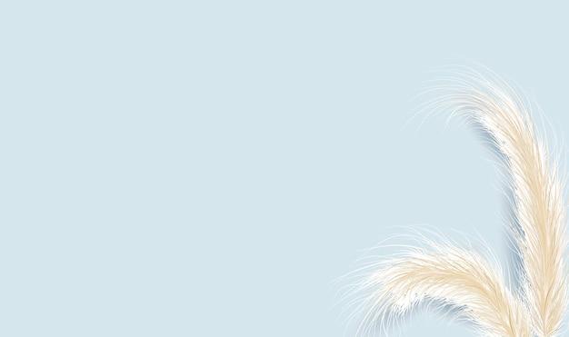 Getrocknetes natürliches pampasgras auf blauem hintergrund