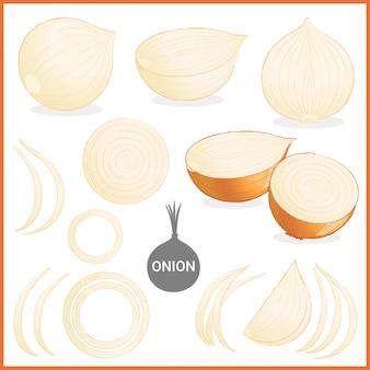 Getrocknetes zwiebelgemüse in verschiedenen schnitten