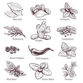 Gewürze und kräuter. handgezeichneter ingwer, chili und schwarzer pfeffer, oregano und lorbeerblatt. minze, kardamom und rosmarin sketch gewürze skizziert set