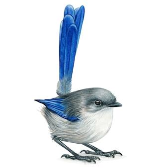 Gezeichnete aquarell-buntstifte des vogels des feenhaften zaunes hand