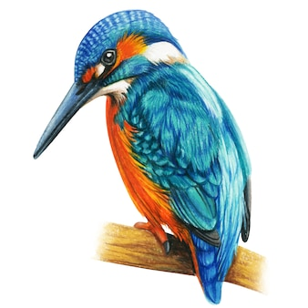 Gezeichnete aquarell-buntstifte vogel martin fischers hand