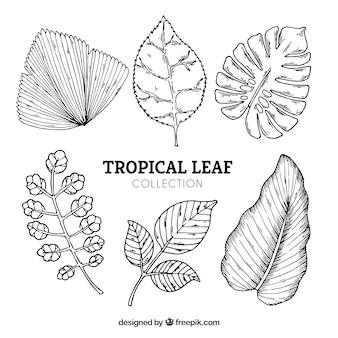 Gezeichnete art der tropischen blätter sammlung in der hand
