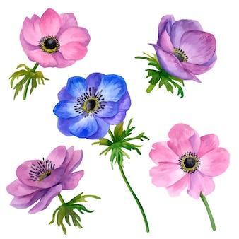 Gezeichnete blumenillustration des vektors anemonen-blumen hand lokalisiert auf weißem hintergrund