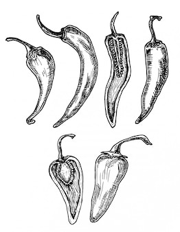 Gezeichnete illustration chili peppers hand