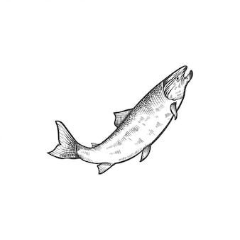 Gezeichnete illustration der lachsfische hand