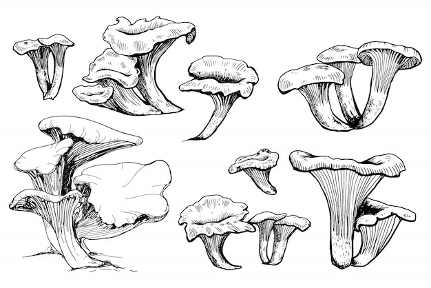 Gezeichnete illustration der pilzhand.