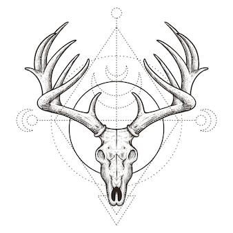 Gezeichnete illustration der rotwildschädel-weinlese hand