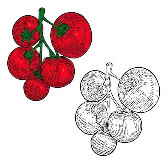 Gezeichnete illustration der tomatenhand auf weißem hintergrund. gestaltungselement für verpackungsdekoration, plakat, menü ,.