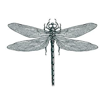 Gezeichnete illustration des libellenstichs hand