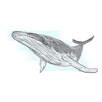 Gezeichnete illustration des vektors hand des buckelwals