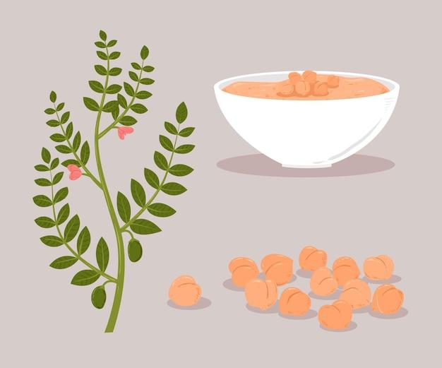 Gezeichnete kichererbsenbohnen und pflanzenillustration